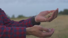 Happy farmer holding ripe wheat corns against field Stock Footage