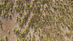 Abstract view of rock rose field from the air Stock Footage
