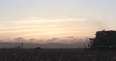 Cotton harvester crossing the frame during sunset Stock Footage
