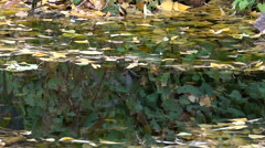Autumn. First Snowflakes. Reflection of Yellow-Green Leaves in a Creek Stock Footage