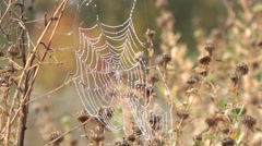 Spider web in the dark forest, the morning dew Morning dew, silence, peace, blis Stock Footage