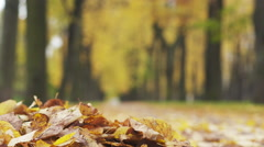 Autumn leaves on alley falling in front of the camre fall season slide shot Stock Footage