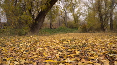 Snowflakes Fall Yellow Carpet of Autumn Leaves. Camera Movement Stock Footage