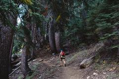 Woman hiking through forest, rear view, Mineral King, Sequoia National Park, Stock Photos