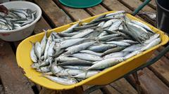 fresh fish from cape verden Stock Photos
