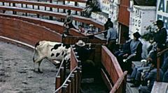 Ecuador 1970: beef walks out the bullfighting arena Stock Footage