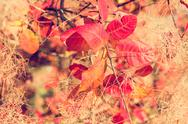 Colorful fall leaves on a tree close up Stock Photos