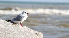Rise gull with coastal cliffs Stock Footage