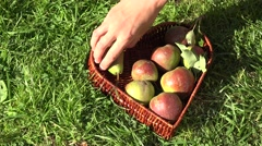 Hand putting pear fruits to wicker heart shape dish in summer orchard garden. 4K Stock Footage