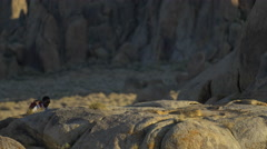 A young man backpacking over boulders in a mountainous desert. Stock Footage