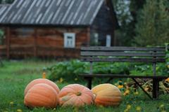 Pumpkin outdoor nature autumn Stock Photos
