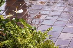 Wet Tiled Patio with Fern and Anthurium in Foreground Stock Photos