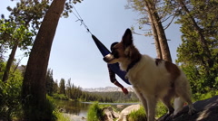 A dog gives his owner a high-five while he is resting in a hammock near a mounta Stock Footage
