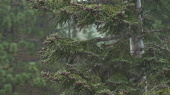 Mountain trees with the rain falling. Stock Footage