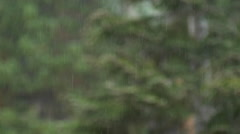 Mountain trees with the rain falling, slow motion. Stock Footage