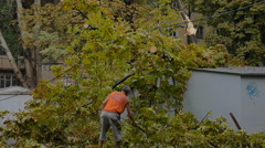 Man cleaning fallen tree after big storm on the road in July Stock Footage