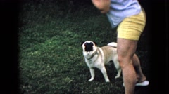 1965: dog near owner happy pug grass playing WELLSBURG IOWA Stock Footage