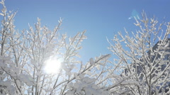 AERIAL, CLOSE UP: Stunning white snowy treetop against blue sky on sunny day Stock Footage
