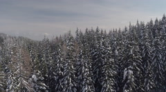 AERIAL: Tall spruce canopies covered with fresh snow on sunny and misty day Stock Footage