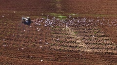 Amazing aerial view of seagulls feeding on worms behind tractor tilling soil Stock Footage