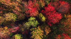 Aerial view of breathtaking autumn colors, aerial flyover view Stock Footage