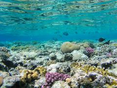 Tropical fish and hard corals in the Red Sea, Egypt. Vacation Stock Photos