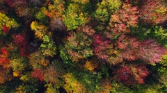 Aerial view of stunning autumn colors, aerial flyover view. Stock Footage