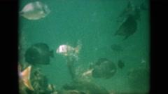 1958: footage of fish in ocean PENNSYLVANIA Stock Footage