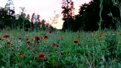 Wild Flowers by a mountain road Stock Footage