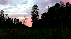 Wildflowers and trees silhouetted by sunset on mountain road Stock Footage