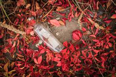 Trash, plastic ware on red leaves Stock Photos