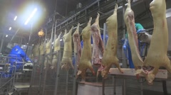 Slaughterhouse for pork production. Pork carcass on the conveyor. Stock Footage