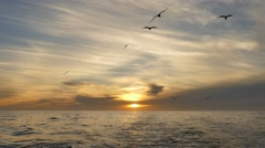 Sea gulls behind boat at sunset Stock Footage