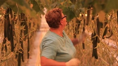 A large greenhouse complex. Woman reaps a crop grown cucumbers Stock Footage