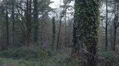 Trees in the woods in a forest, super slow motion. Stock Footage