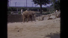 1965: a lone elephant walks up a sandy hill as people and birds pass by  Stock Footage