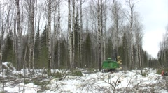 Mechanized felling clearing. Long shot. Stock Footage