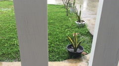 Plant with flowerpot outside the house through the wooden fence in the raining Stock Footage