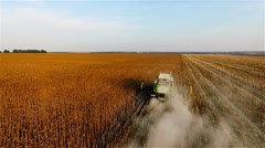 Flight over harvester sunflowers field HD aerial video. Combine seeds cropping Stock Footage