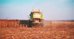 Working harvester combine sunflowers field 2k slow motion video Farm machine Stock Footage