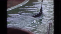 1966: seal swimming holding up stick with bird on top of it OHIO Stock Footage