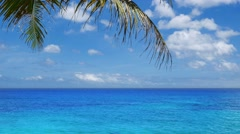 Tilt up of amazing tropical scenery in UHD Stock Footage