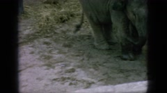 1966: baby elephant playing in enclosure with child and zoo keeper NEW JERSEY Stock Footage