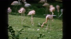 1966: flamboyance in all their glory. NEW JERSEY Stock Footage