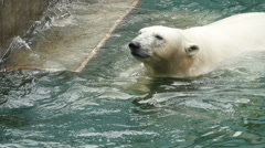 Polar bear swims and dives Stock Footage