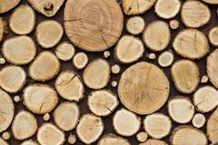 Wood texture background have many logs that cut from big and small tree Kuvituskuvat