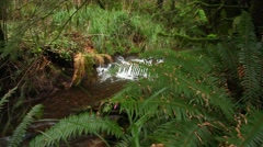 Wild Stream with lush green along the Oregon Coast Stock Footage