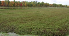 4K motion shot driving about cranberry farm and bog in autumn Stock Footage