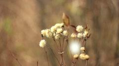 Flower autumn snow Stock Footage