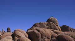 Raven on boulders, Alabama Hills Stock Footage